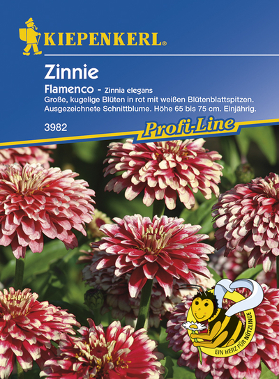 Zinnia Flamenco Red White Bicolor