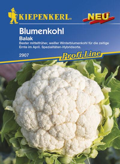Blumenkohl Multi Head PMHC927075