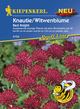 Knautie / Witwenblume Red Knight