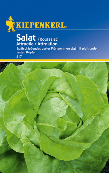 Salat (Kopfsalat) Attractie