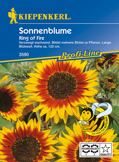 Helianthus annuus, Ring of Fire, Sonnenblume