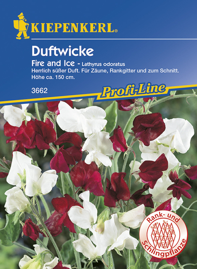 Lathyrus oduratus Edelwicken Fire and Ice rot weiss