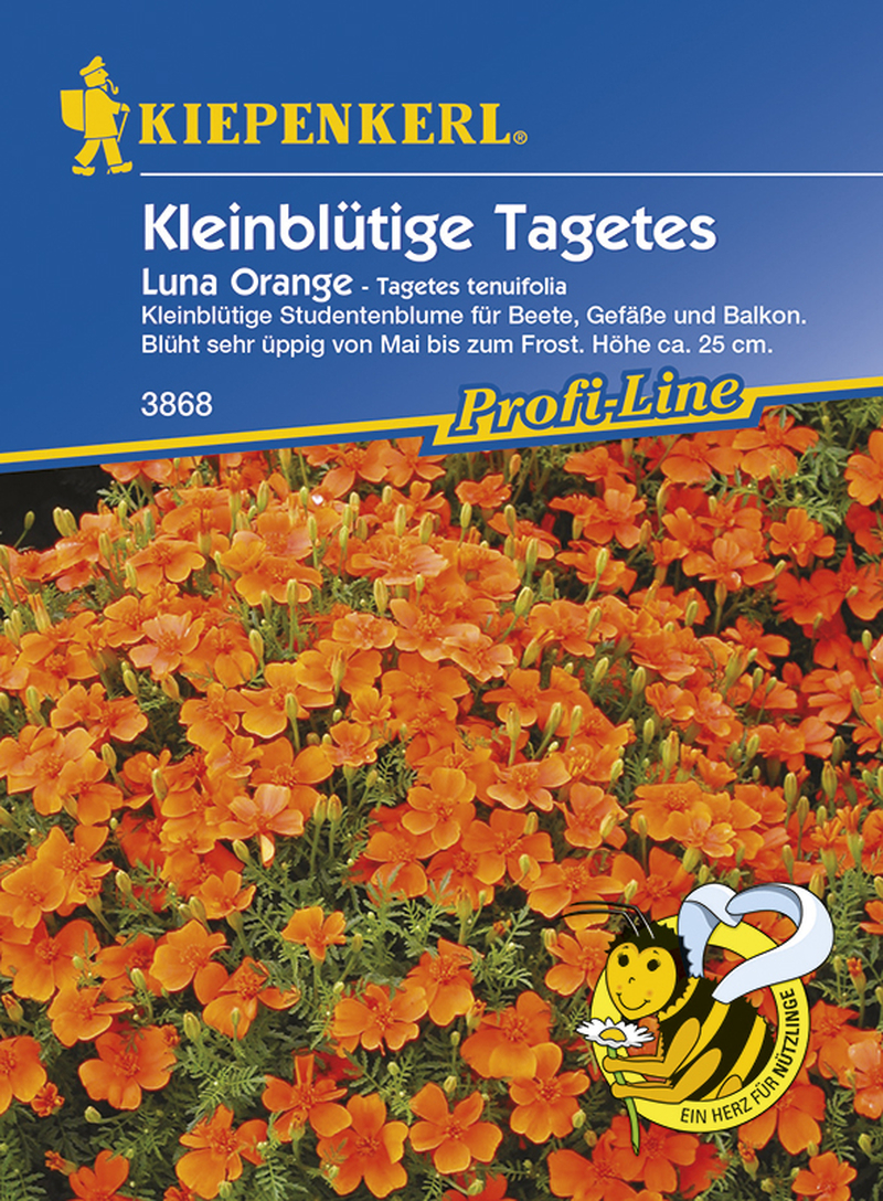 Tagetes tenuifolia Luna Orange