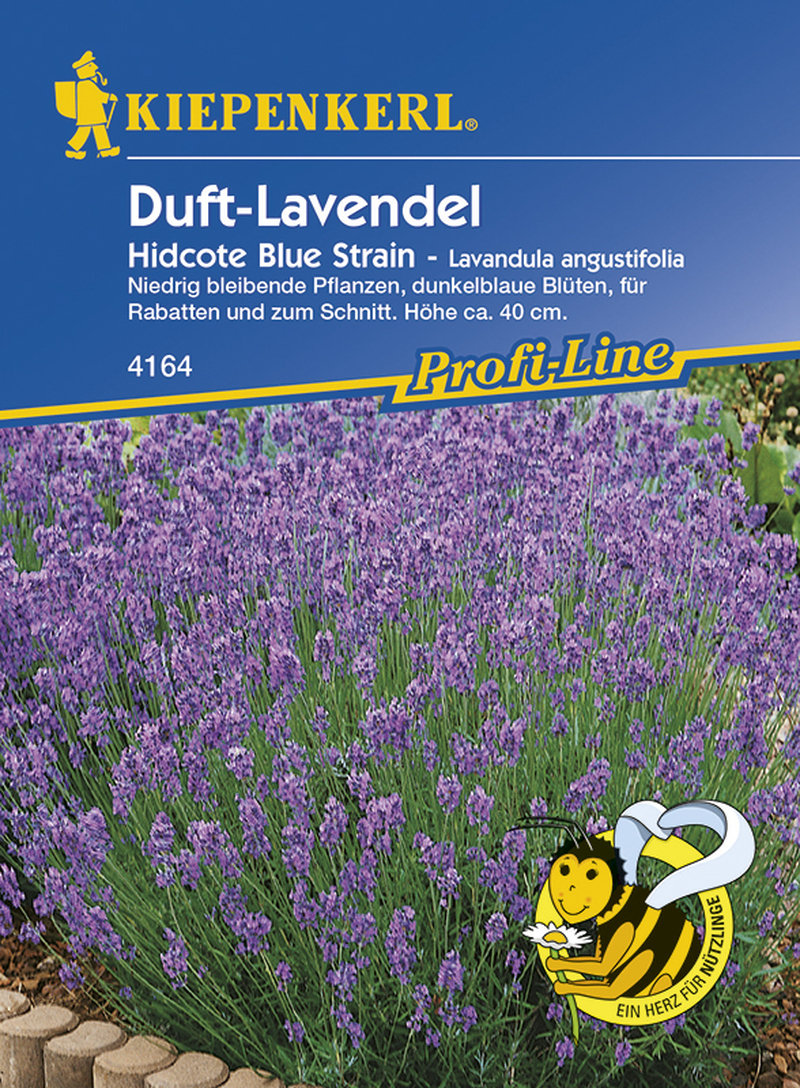 lavandula angustifolia duft lavendel hidcote blue strain samenshop2. Black Bedroom Furniture Sets. Home Design Ideas
