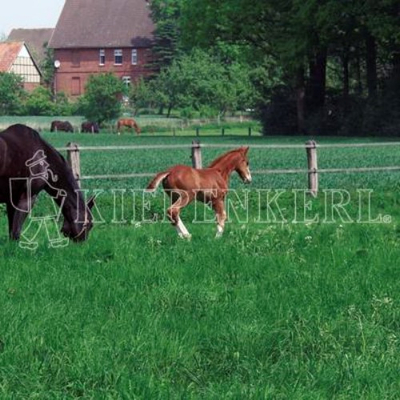 DSV Country-Horse 2117 Pferdegreen 10kg