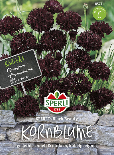Kornblume SPERLING´s Black Beauty