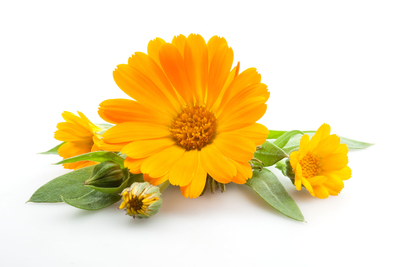 Calendula Officinalis 10g
