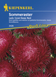 Astern Sommeraster Lady Coral Deep Red