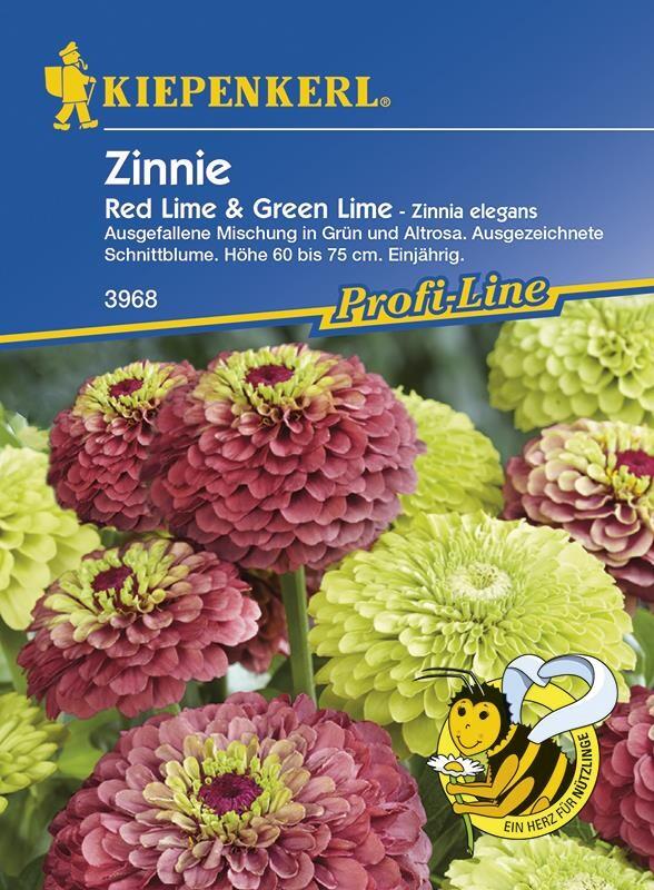 Zinien Zinnie elegans Red Lime & Green Lime
